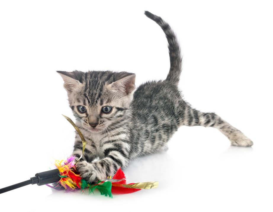 A macskás videók mellett unatkozni nem lehet